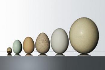 z25360061K,Od-lewej-do-prawej-jaja--przepiorki--kury--kaczki-