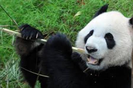 Projekt PANDA trwa nadal.
