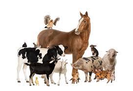 Zwierzęta na wiejskim podwórku