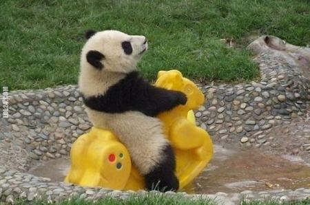 Zabawy małych Pand