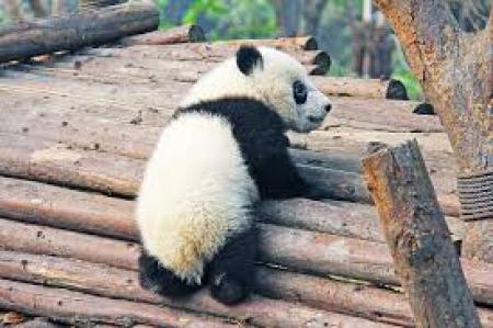Do widzenia Pando