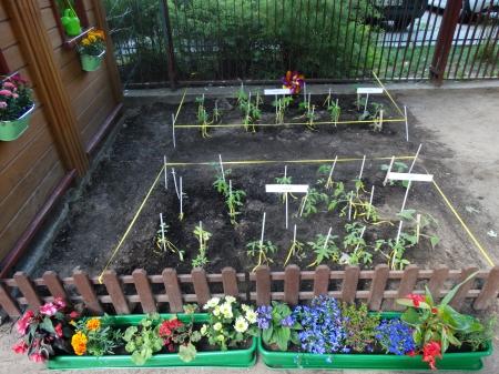 Nasza uprawa roślin - wspomnienia