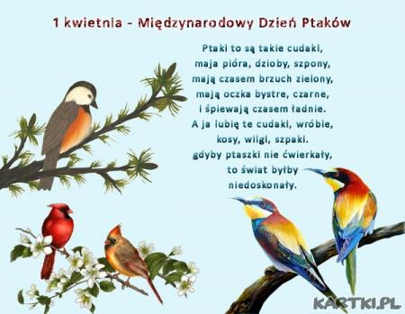 Ptaki - dziwaki