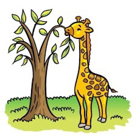 Zwierzęta egzotyczne cz 4