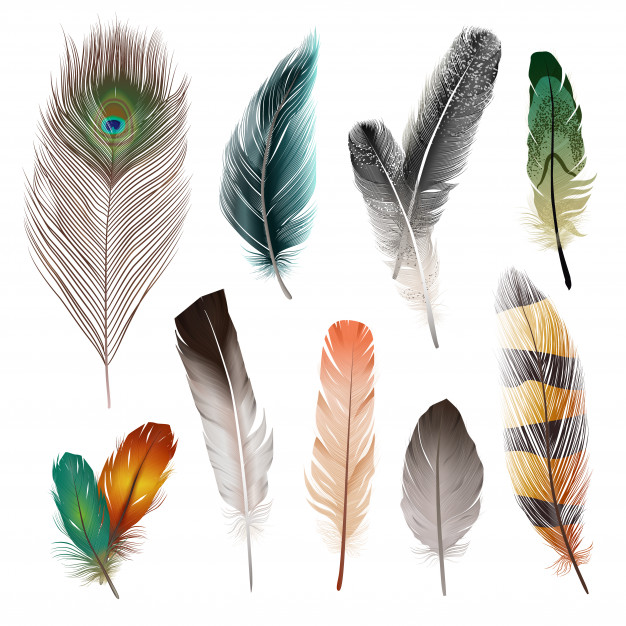 Jak to się dzieje że ptaki latają?